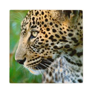 Portrait Of Leopard (Panthera Pardus) Wood Coaster