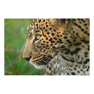 Portrait Of Leopard (Panthera Pardus) Wood Print