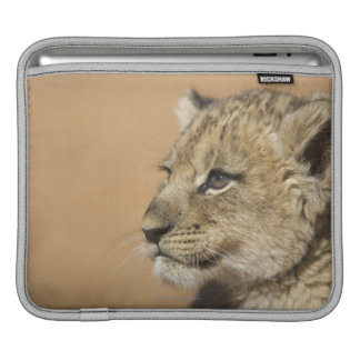 Portrait of Lion cub (Panthera Leo), Namibia iPad Sleeves