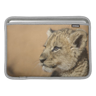 Portrait of Lion cub (Panthera Leo), Namibia MacBook Sleeve