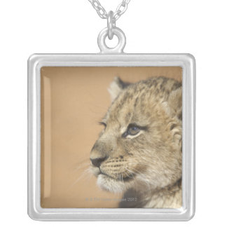 Portrait of Lion cub (Panthera Leo), Namibia Silver Plated Necklace