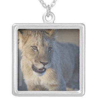 Portrait of Lion Cub (Panthera Leo), Namibia Square Pendant Necklace
