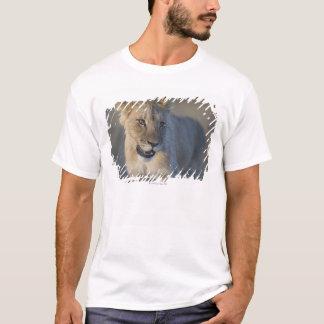 Portrait of Lion Cub (Panthera Leo), Namibia T-Shirt