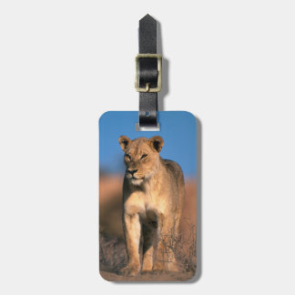 Portrait Of Lioness (Panthera Leo) Luggage Tag
