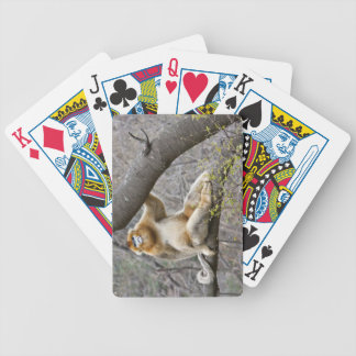 Portrait of male Golden monkey in tree Bicycle Playing Cards