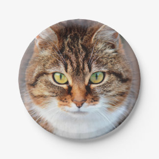 Portrait of Manx Cat Green-Eyed Paper Plate