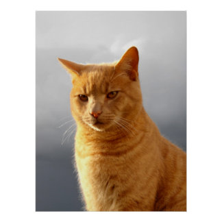 Portrait of Merlin the ginger cat Poster