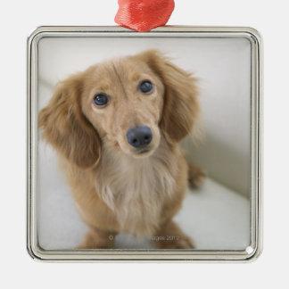 Portrait of Miniature Dachshund sitting, high Christmas Ornament