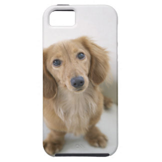Portrait of Miniature Dachshund sitting, high iPhone 5 Cover