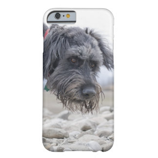 Portrait of mix breed dog, leaning over pebbles. barely there iPhone 6 case
