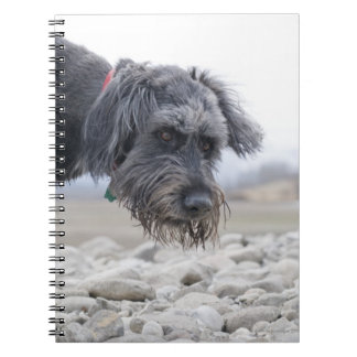 Portrait of mix breed dog, leaning over pebbles. notebooks