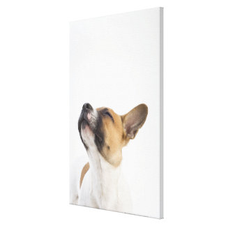 portrait of mongrel puppy canvas print