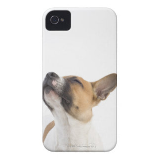 portrait of mongrel puppy iPhone 4 cover