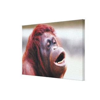 Portrait of orangutan canvas print