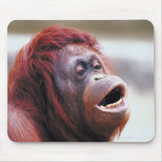 Portrait of orangutan mouse mat