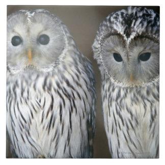Portrait of owls tile