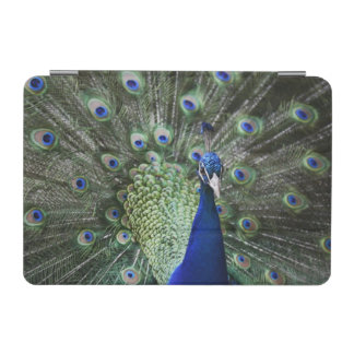 Portrait Of  Peacock With Feathers Out iPad Mini Cover