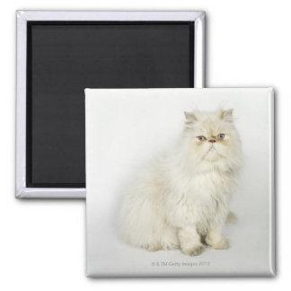 Portrait of Persian cat Square Magnet