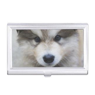 Portrait of puppy business card holder