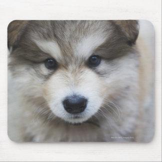 Portrait of puppy mouse pad