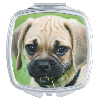 Portrait of puppy standing in grass makeup mirrors