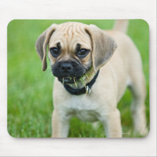 Portrait of puppy standing in grass mouse mat