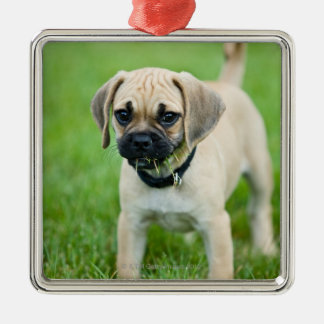 Portrait of puppy standing in grass Silver-Colored square decoration