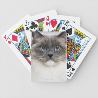 Portrait of Ragdoll cat Bicycle Playing Cards