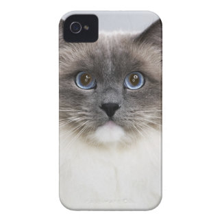 Portrait of Ragdoll cat Case-Mate iPhone 4 Case