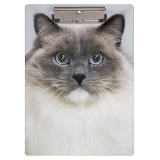 Portrait of Ragdoll cat Clipboard