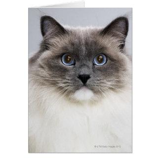 Portrait of Ragdoll cat Greeting Card