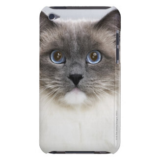 Portrait of Ragdoll cat iPod Touch Cover