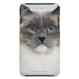 Portrait of Ragdoll cat iPod Touch Covers