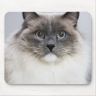 Portrait of Ragdoll cat Mouse Mat