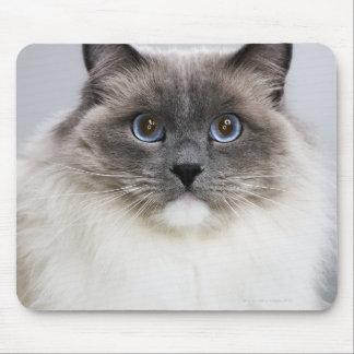 Portrait of Ragdoll cat Mouse Pad