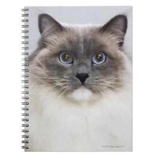 Portrait of Ragdoll cat Notebook