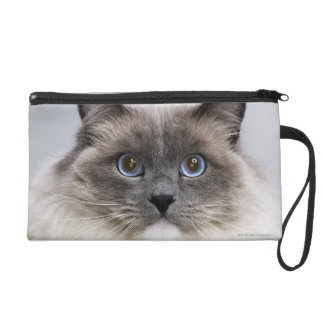 Portrait of Ragdoll cat Wristlet