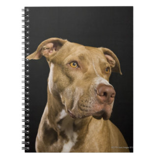 Portrait of red nose pitbull with black notebooks