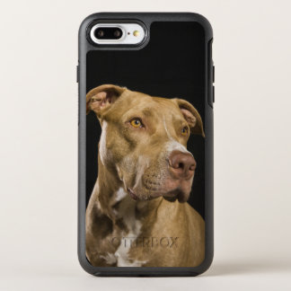 Portrait of red nose pitbull with black OtterBox symmetry iPhone 8 plus/7 plus case