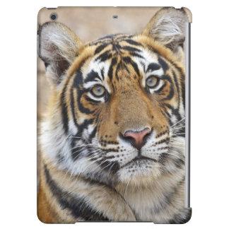 Portrait of Royal Bengal Tiger, Ranthambhor