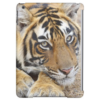Portrait of Royal Bengal Tiger, Ranthambhor 4
