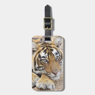 Portrait of Royal Bengal Tiger, Ranthambhor 4 Bag Tag