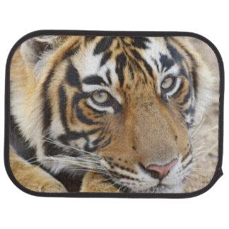 Portrait of Royal Bengal Tiger, Ranthambhor 4 Car Mat
