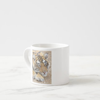 Portrait of Royal Bengal Tiger, Ranthambhor 4 Espresso Cup