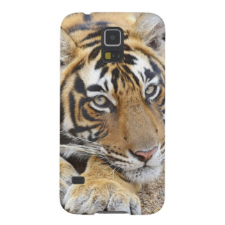 Portrait of Royal Bengal Tiger, Ranthambhor 4 Galaxy S5 Covers