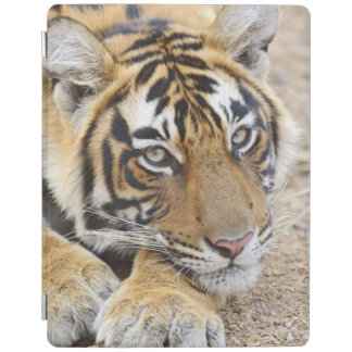 Portrait of Royal Bengal Tiger, Ranthambhor 4 iPad Cover