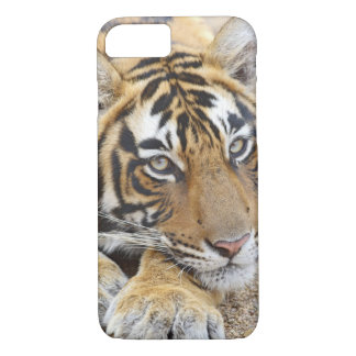 Portrait of Royal Bengal Tiger, Ranthambhor 4 iPhone 8/7 Case