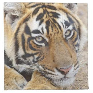 Portrait of Royal Bengal Tiger, Ranthambhor 4 Napkin