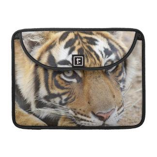 Portrait of Royal Bengal Tiger, Ranthambhor 4 Sleeve For MacBook Pro