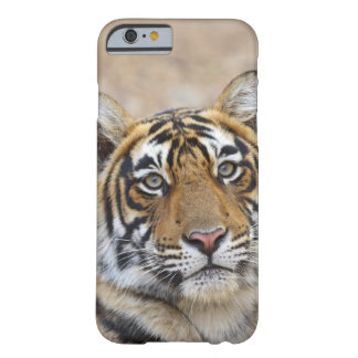 Portrait of Royal Bengal Tiger, Ranthambhor Barely There iPhone 6 Case